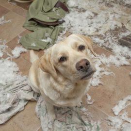 Как собаки становятся причиной развода?